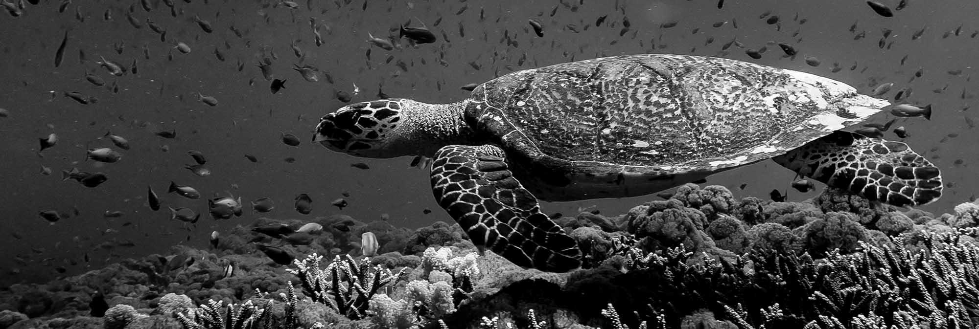 Turtle sliding header