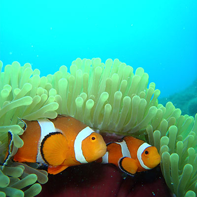 True Facts About Finding Nemo - Twin Island Dive Lembongan