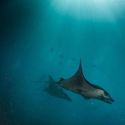 Visit Lembongan - Manta Rays
