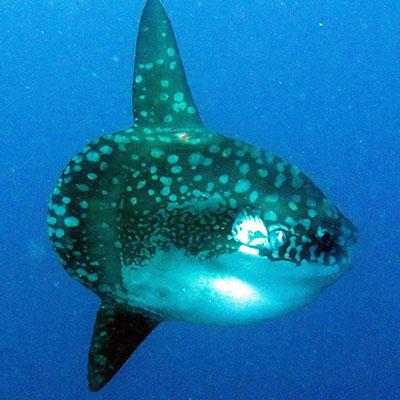 Visit Lembongan - Mola