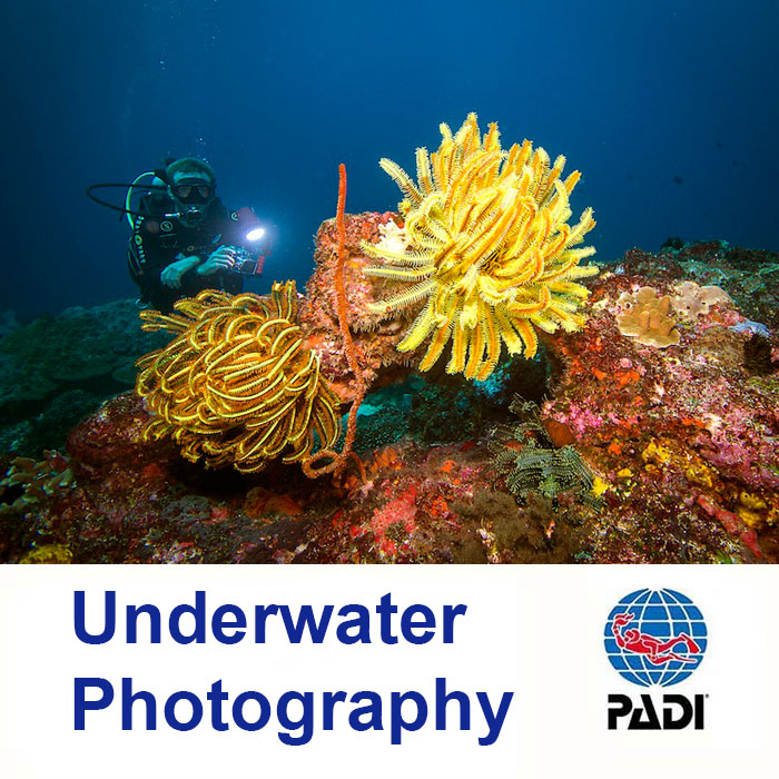 Underwater photography twin island dive underwater photography photography publicscrutiny Images