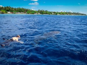 Whale Shark in the North Coast of Penida