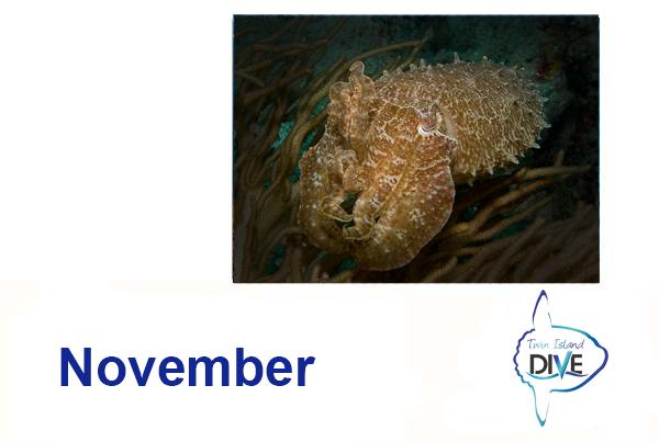 November Special