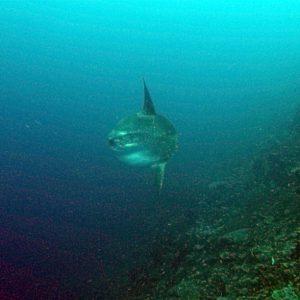 Mola on the north coast of Nusa Penida
