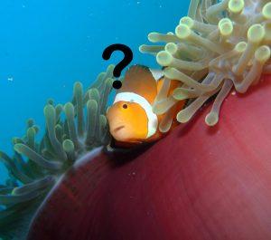 Confused Nemo