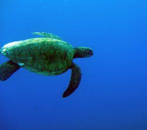 Turtle Dude (Finding Nemo)