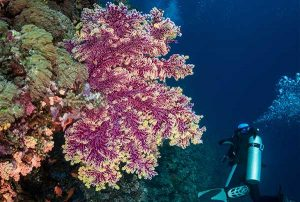 Diver and Sea Fan - Holiday Deals
