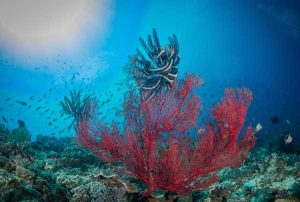 Sea Fan - Holiday Deals