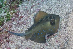 Sting Ray - Holiday Deals