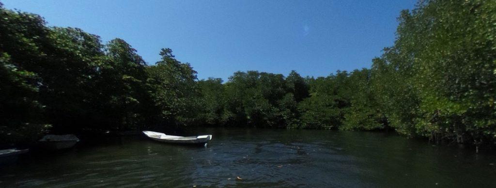 Mangrove - About Lembongan