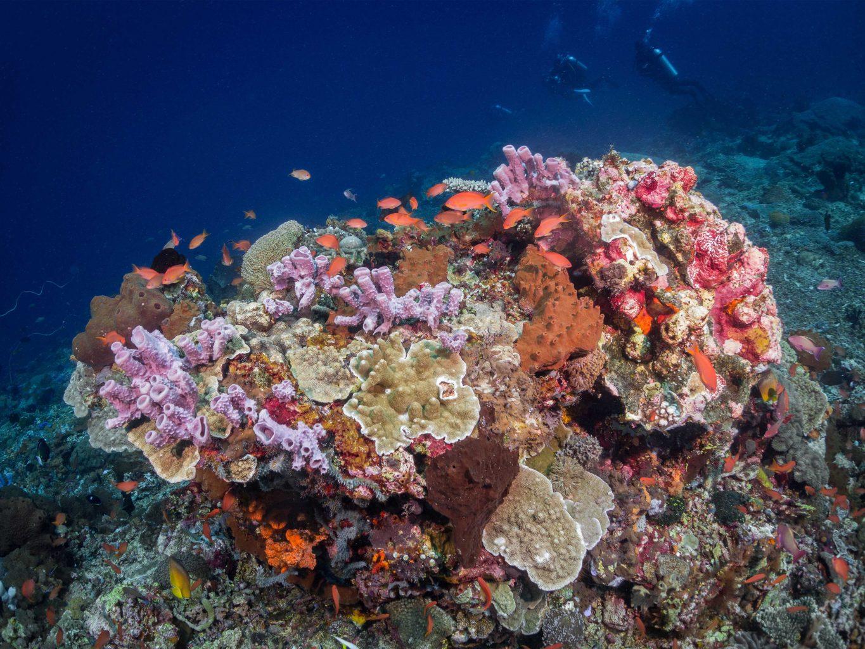 Reef - About Lembongan