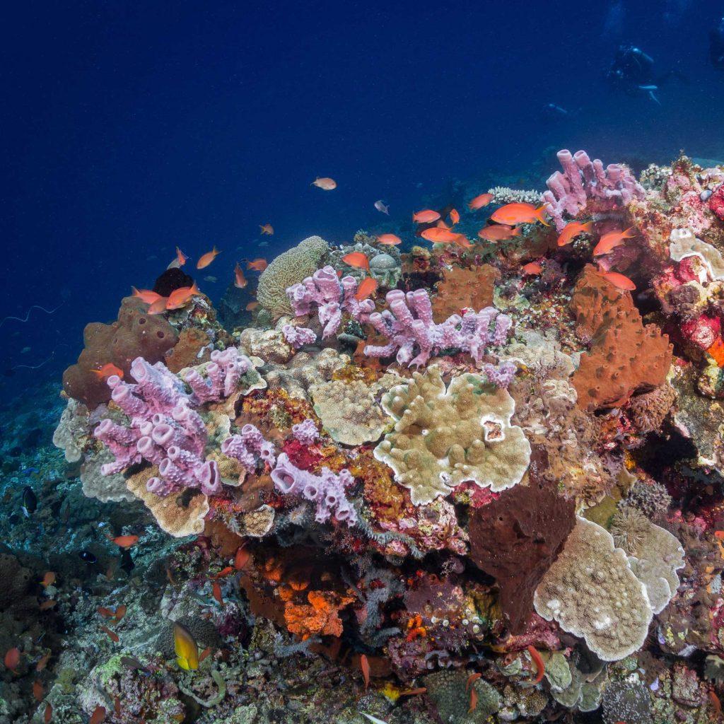 Reef - Divemaster Lembongan