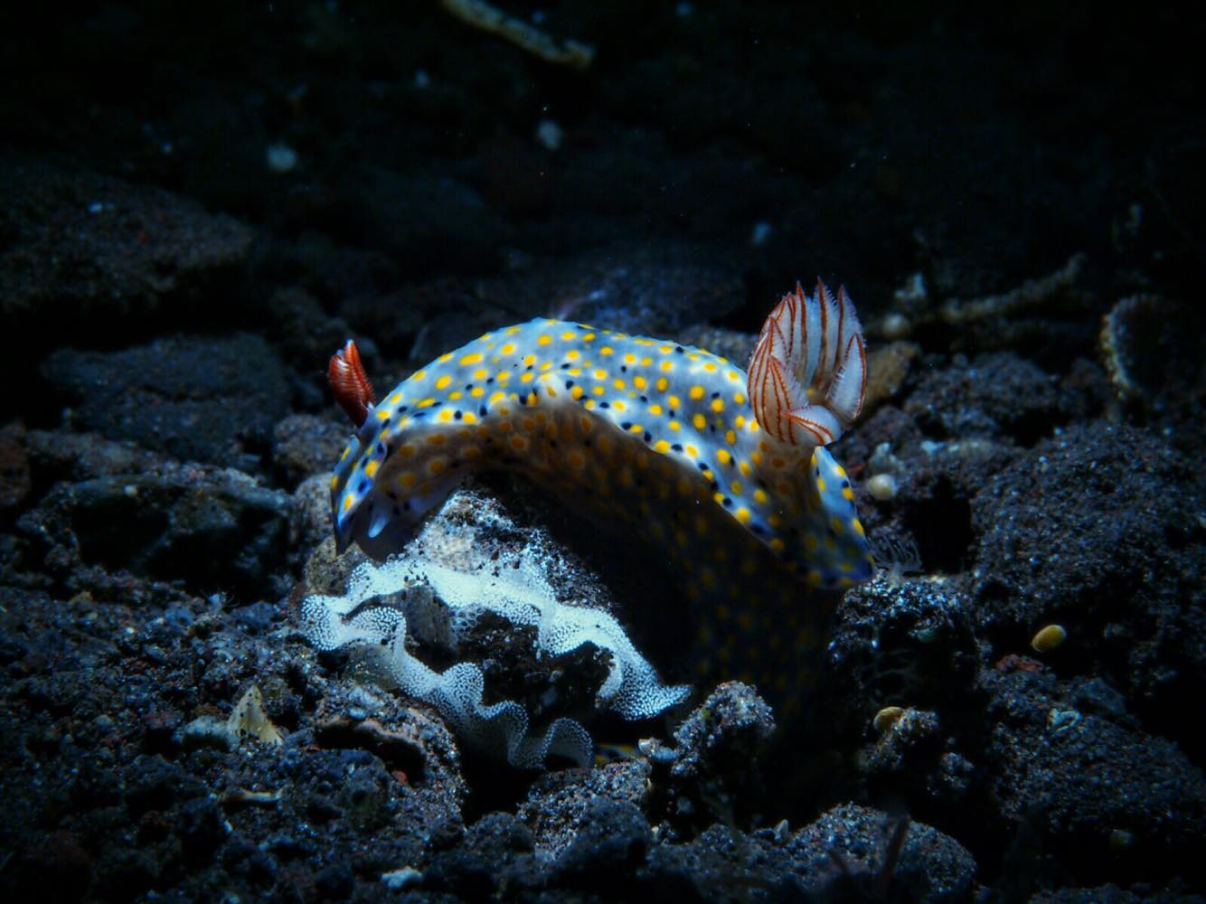 Underwater Photography: Nudibranch