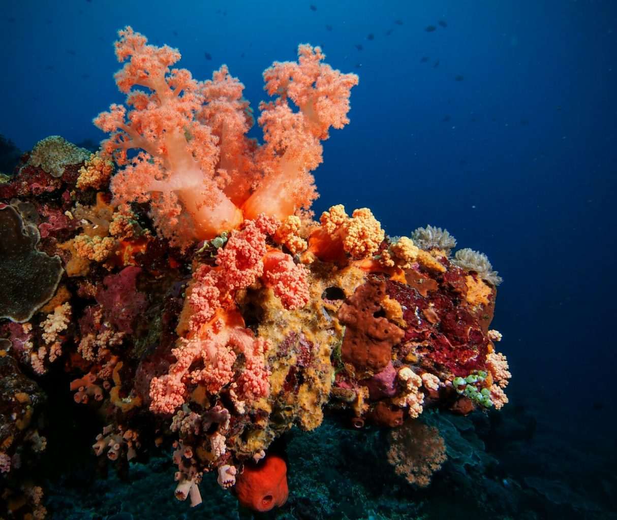 Underwater Photography: Coral Reef