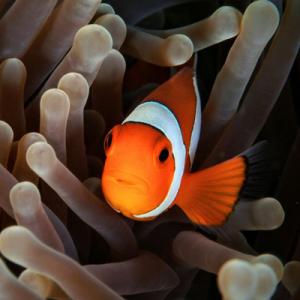 Private boat for finding Nemo