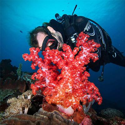 Diving in Lembongan - Reef