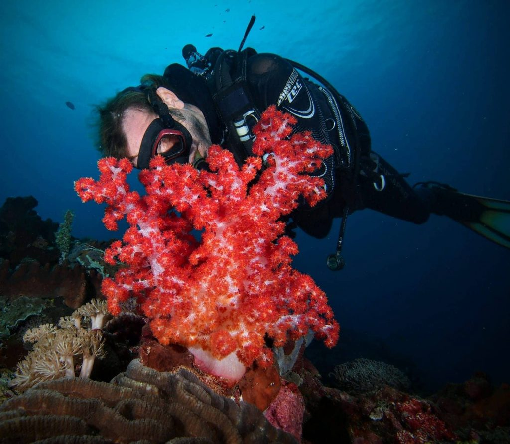 Coral Reefs while drift diving in Lembongan